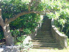 Rental home, study, work, Tonga. Property for investment or retirement