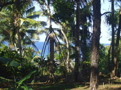 Tonga property beach lot - real estate for resort